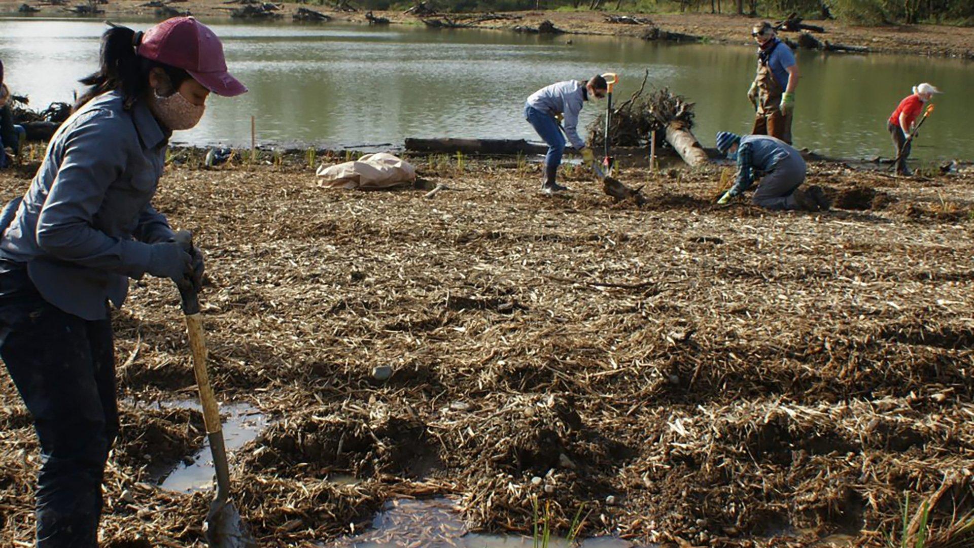 Volunteer Planting - Chehalis Basin Task Force